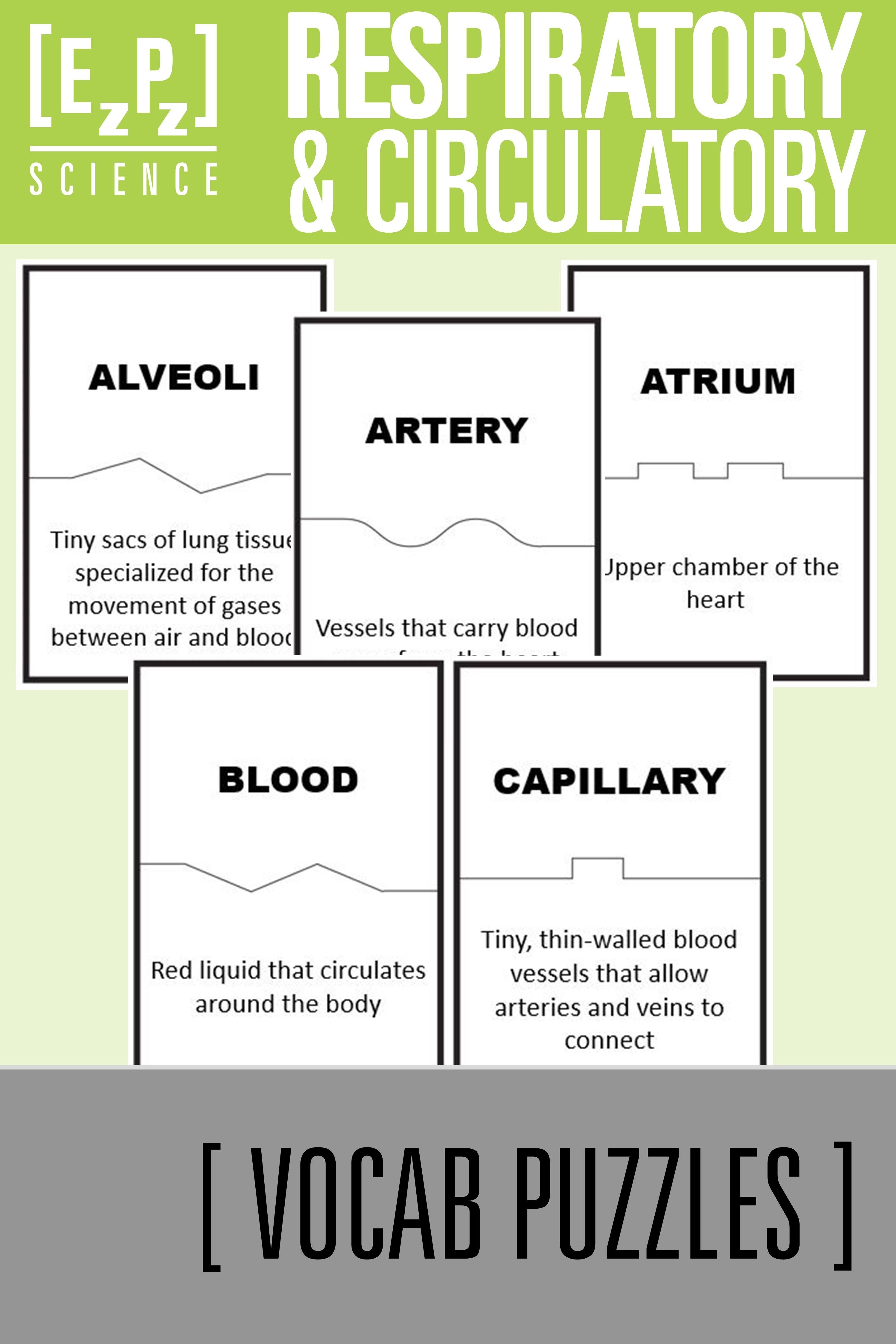 Respiratory And Circulatory Systems Science Vocabulary