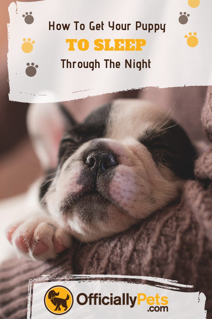 How To Get A Puppy To Sleep Through The Night Congrats On Your New Puppy It S An Exciting Time But Getti Getting A Puppy Training Your Puppy Puppy Training