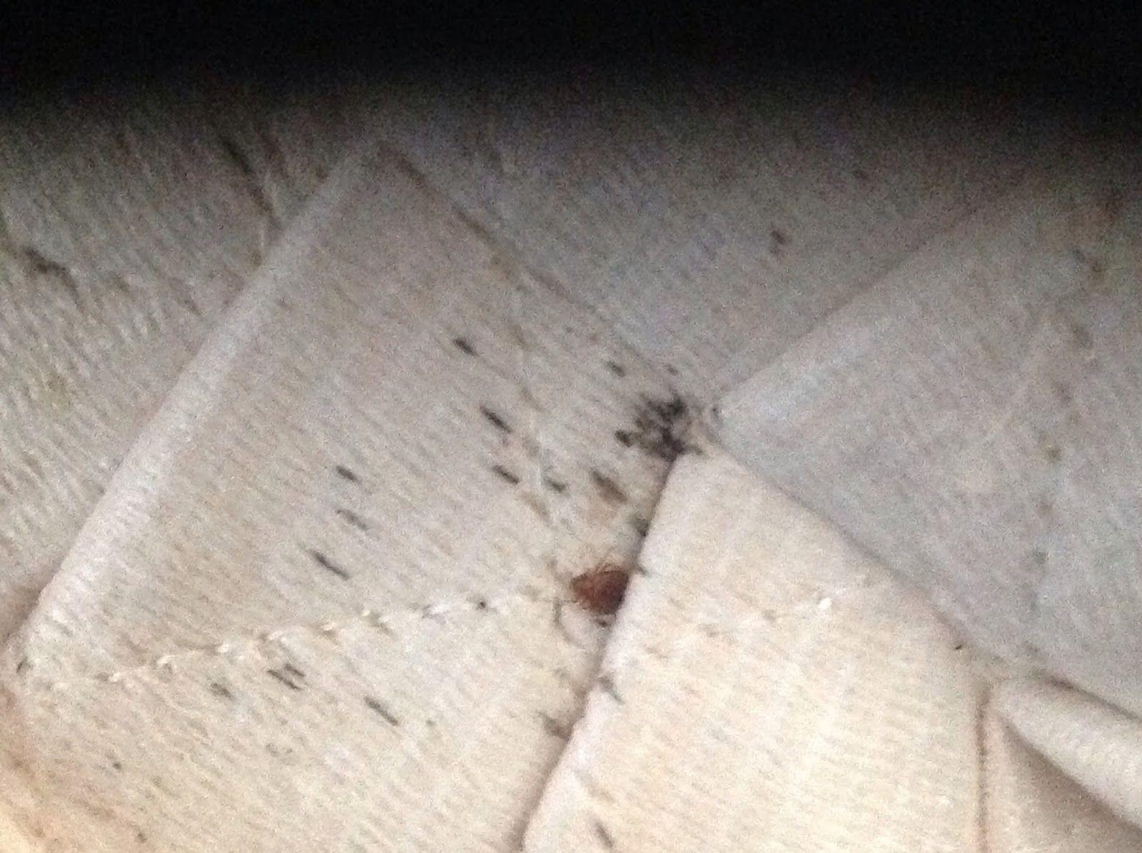 AtlantaMaconAugustaAthens Bed Bugs Blog Bed
