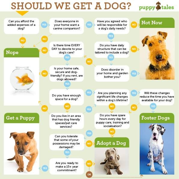 Should You Get A Dog Flowchart Dog Care Spoiled Pets Spoiled Dogs