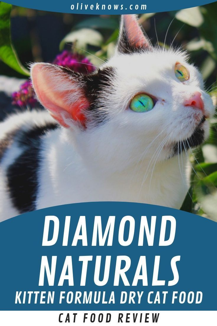 Diamond Naturals Kitten Formula Dry Food Is Is Cheap In Price But Not In Quality And Ingredients It Is Also Consider In 2020 Cat Food Reviews Kitten Formula Cat Food