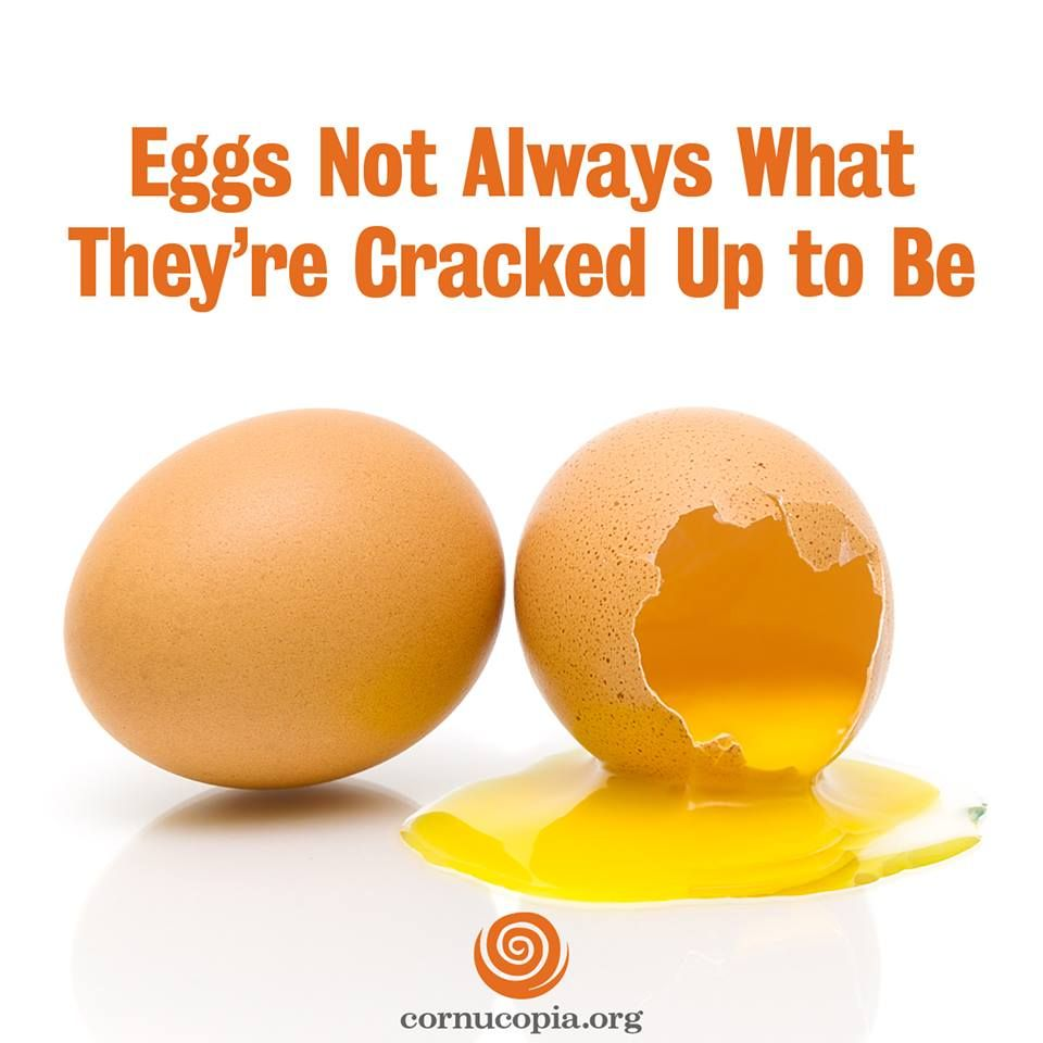 You're in the supermarket gathering ingredients for eggnog last month and a Christmas Bundt cake, and you're staring at a wall of egg cartons. They're plastered with terms that all sound pretty wonderful: All-Natural, Cage-Free, Free-Range, Farm Fresh, Organic, No Hormones, Omega-3. Learn what this all means: http://www.cornucopia.org/2014/12/eggs-not-always-theyre-cracked #eggs #food The Cornucopia Institute