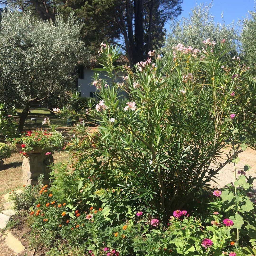 Andere Leute Haben Auch Schone Garten Seit Gestern Bin Ich In Der Toskana Und Das Hier Ist Der Garten Meiner Schwiegere Naturgarten Gartenarbeit Schrebergarten