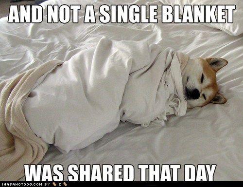 89c096b9fe91ac7c0274f013e7aea572 blanket hogging dog blanket, dog and shiba