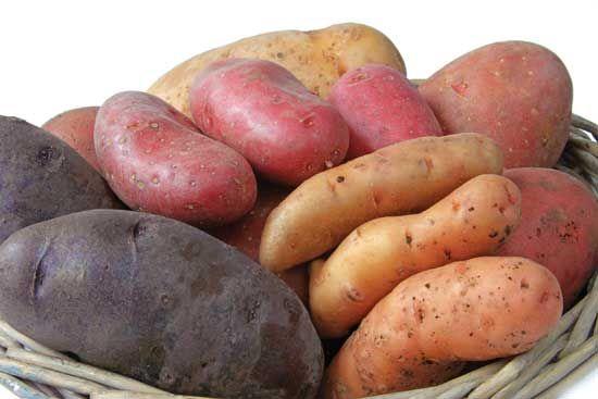 How to Grow Organic Potatoes | MOTHER EARTH NEWS