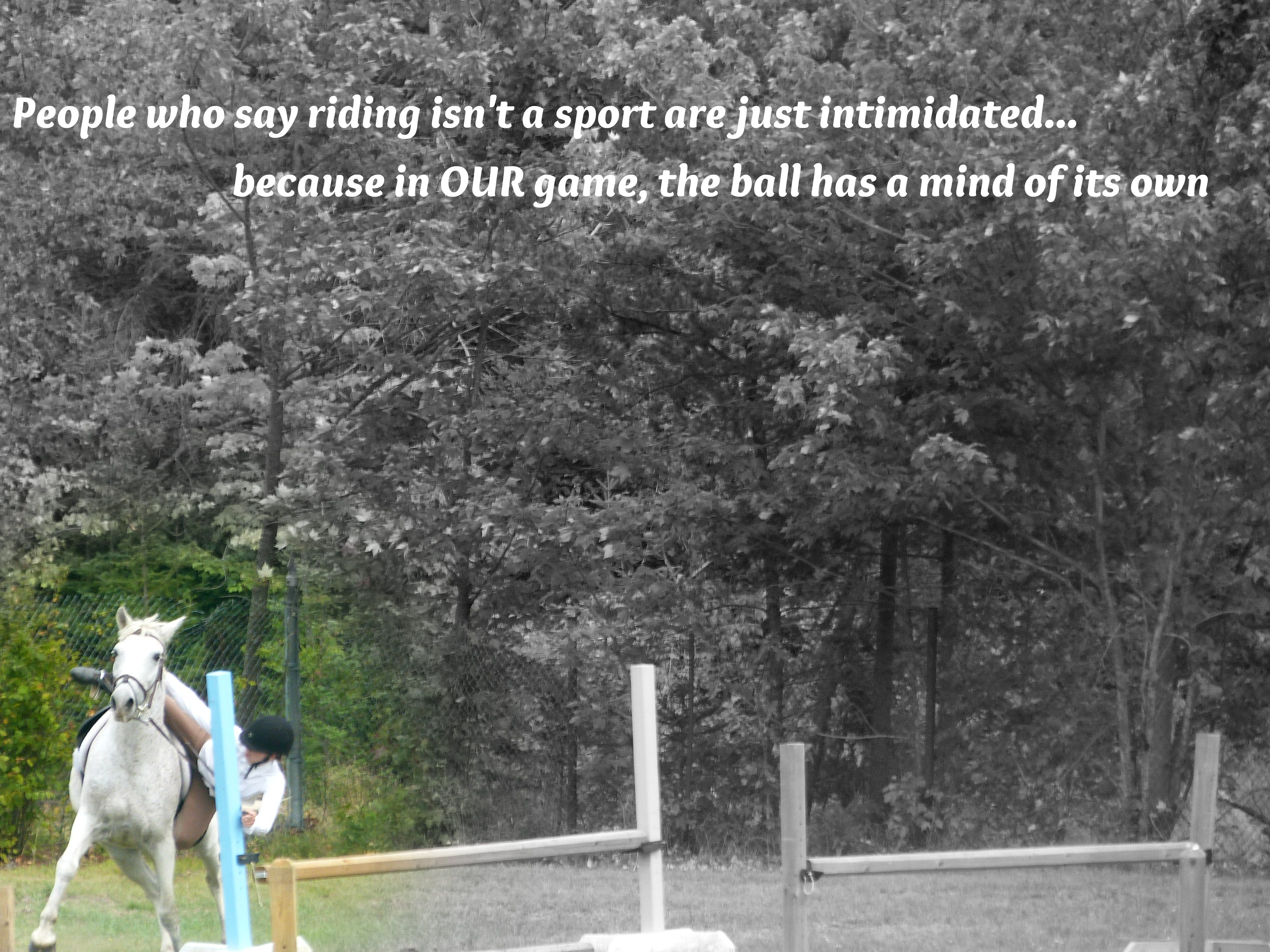 Pics photos quote i wrote for my horse com account s equestrian -  People Who Say Riding Isnt A Sport Are Just Intimidated Because In Our Games Equine Quotesequestrian