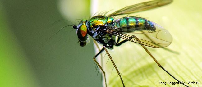 Insect and Spider Identification - Information and ...