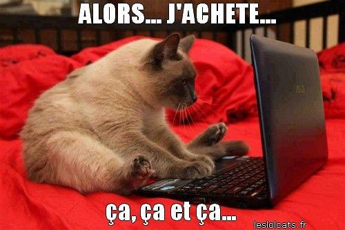 chat accro | Photos de chats rigolos, Image chat drole, Photo drole animaux