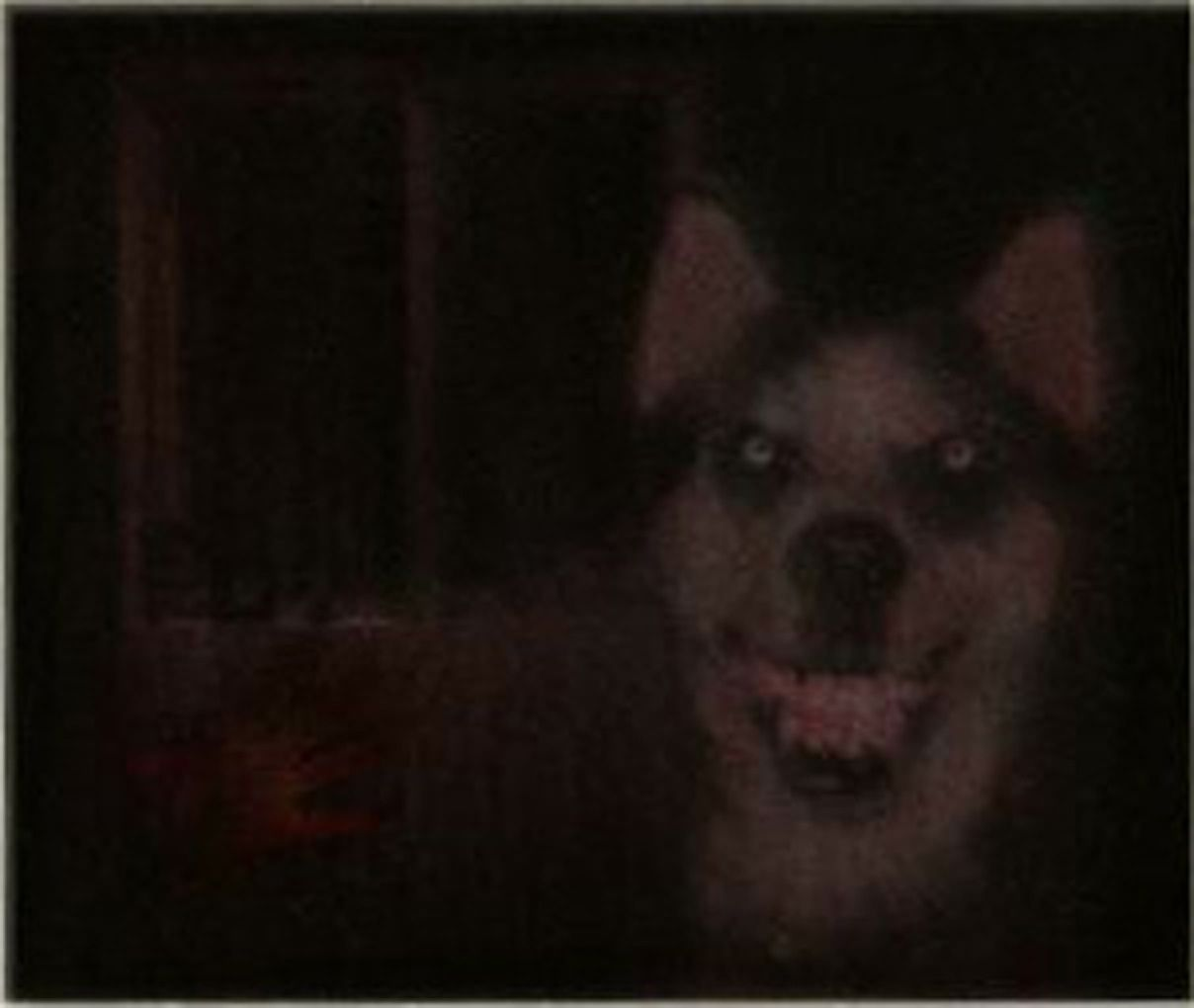 Smile Jpg Also Known As Smile Dog Is A Creepypasta Story About A Haunted Image That Drives Those Who View It Insan Scary Photos Creepy Images Creepy Pictures