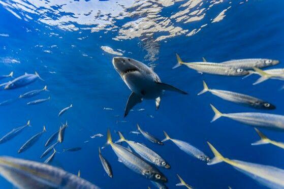 Pin by Maicky Rodriguez on Vida MARINA EL ESPLENDOR DÉL MAR Pinterest - marine biologist job description