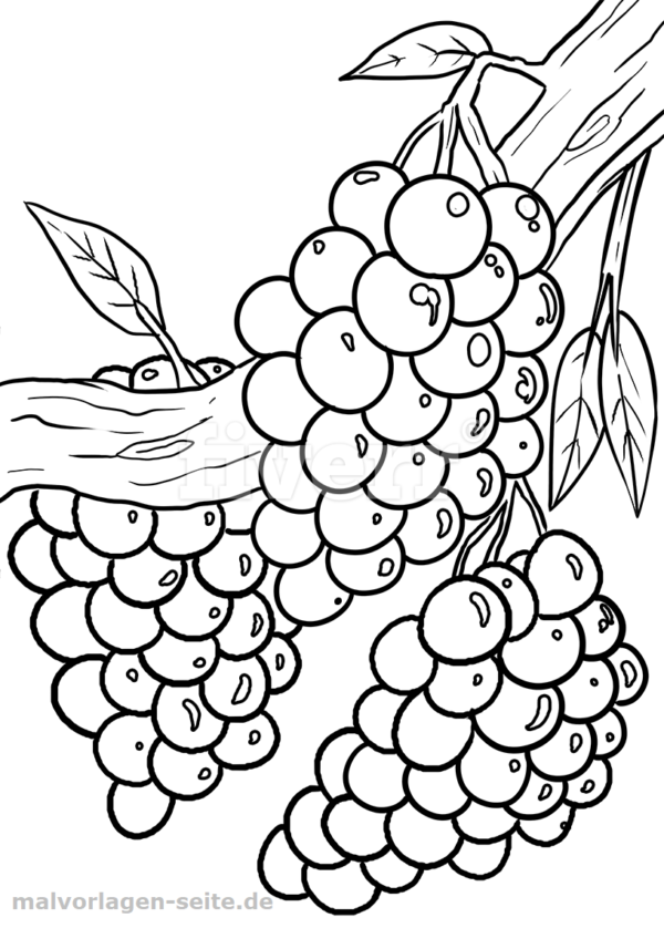 Malvorlage Weintrauben Obst Malvorlagen Wenn Du Mal Buch Vorlagen