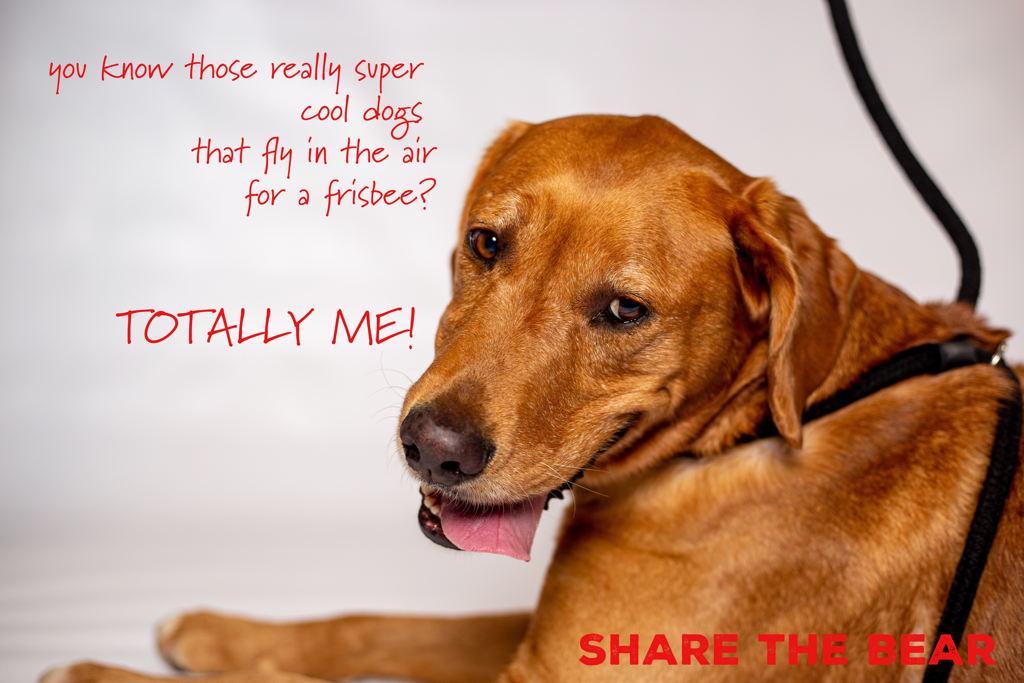 Golden Rescue South Florida Available Goldens Dog Adoption Dog Love