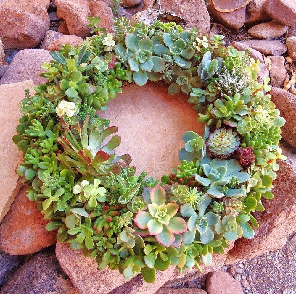 Mental note for christmas next year.... succulent wreath
