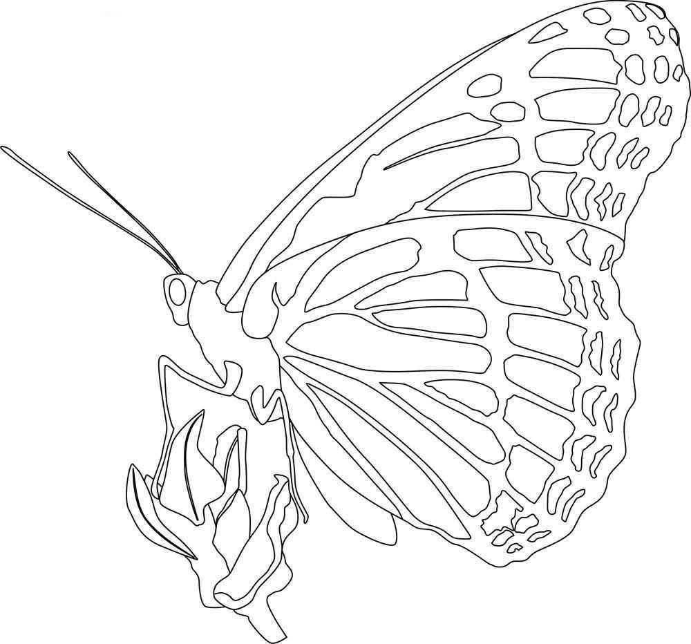Brilliant Image Of Monarch Butterfly Coloring Page Butterfly