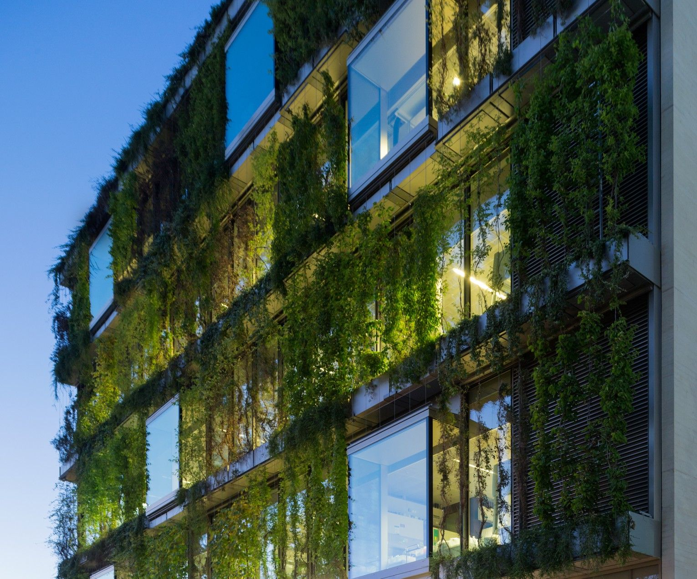 Fassadenbegrünung Novartis Campus, Basel