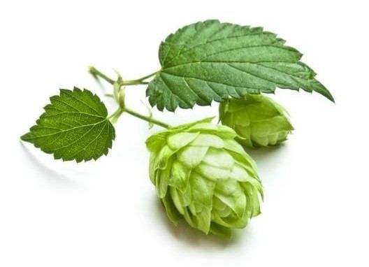 Health Benefits Of Hops Essential Oil Organic Facts Beer Hops Hops Plant Hops Vine
