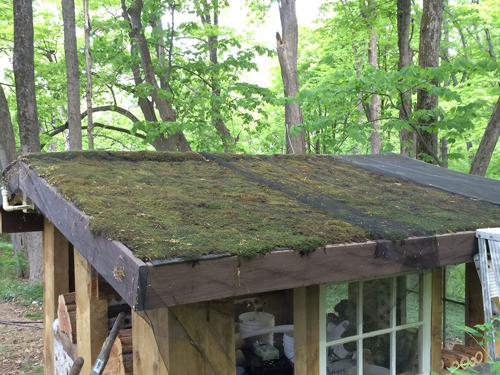 Green Live Moss Roofs Green Roof Green Roof