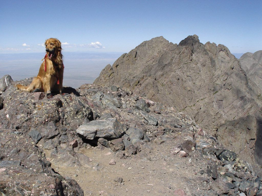 Dogs have a hard time at altitude, too Dog presents