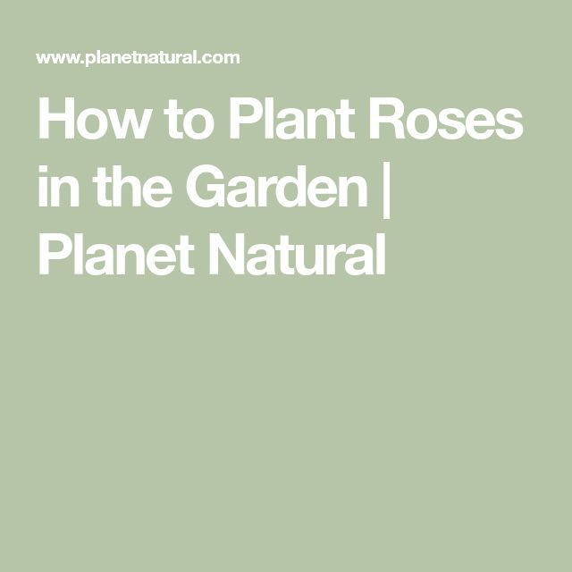 How to Plant Roses in the Garden #shadecontainergardenideas