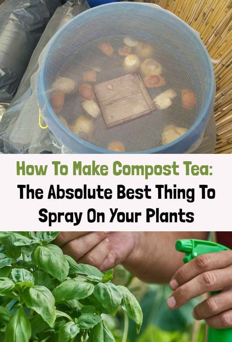 How To Make Compost Tea The Best Thing To Spray On Your Plantscompost