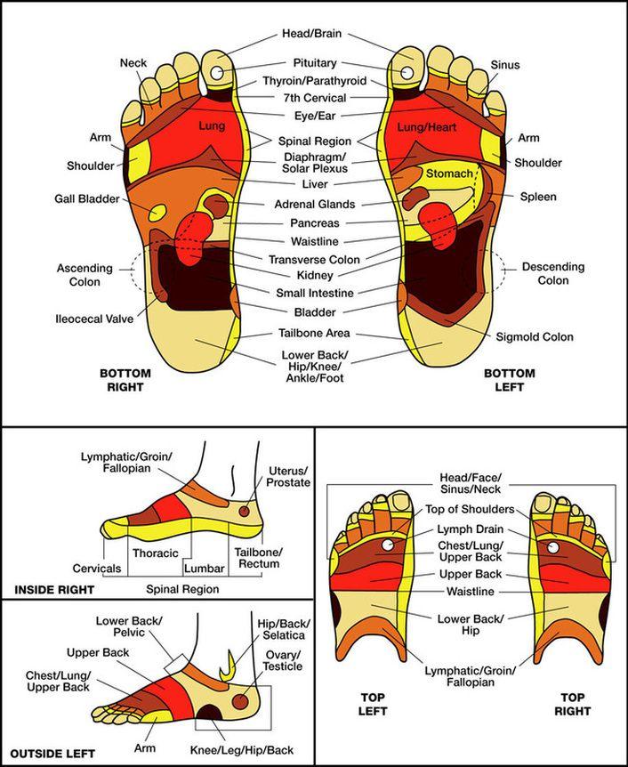 Reflexology, Reflexology Chart, Foot Reflexology