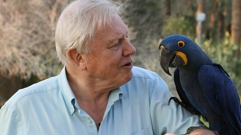 Access 1,000 D Attenborough clips for free with BBC natural history app #bbc #documentary