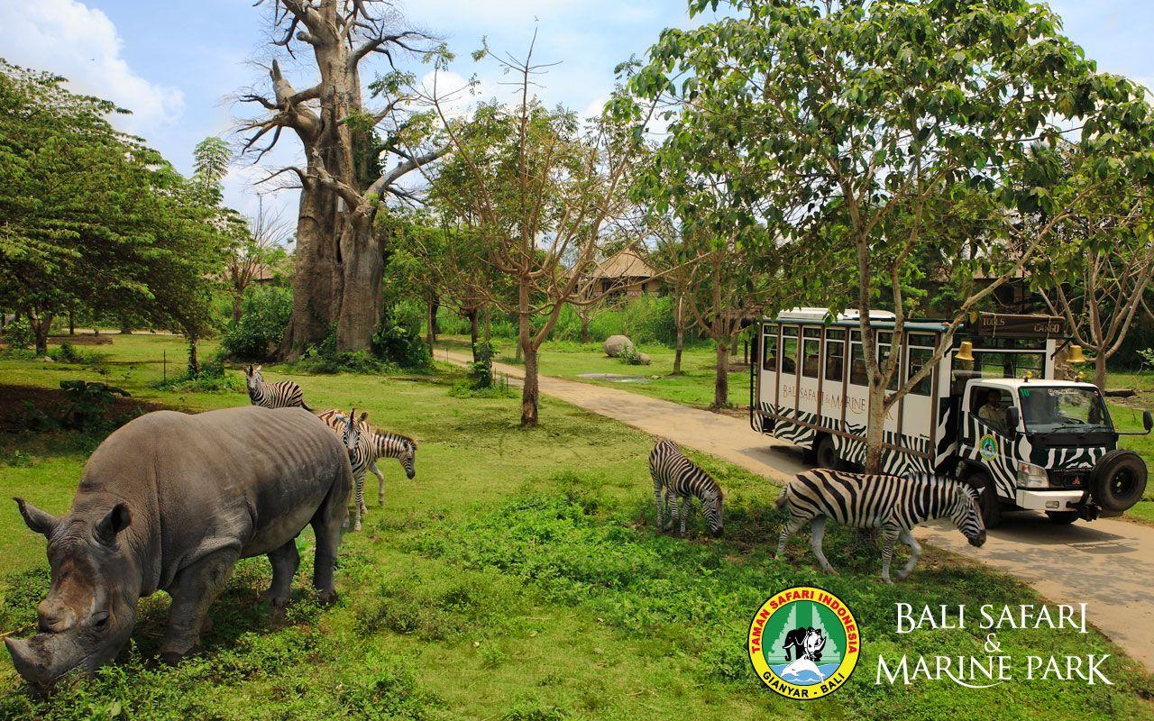 Bali Safari Dan Marine Park 7 Objek Wisata Di Bali Untuk