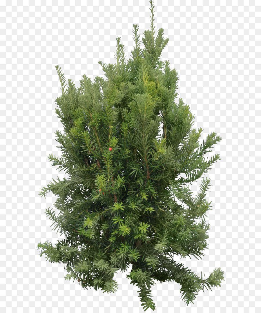 Https Www Google Com Search Q Christmas Tree Png Tree Christmas Tree Christmas