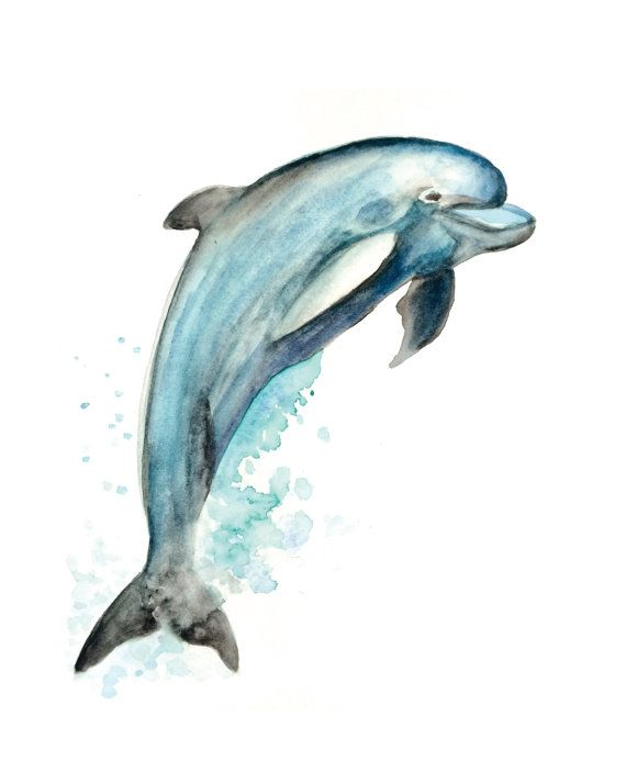 Dolphin Pictures To Print - Cinebrique
