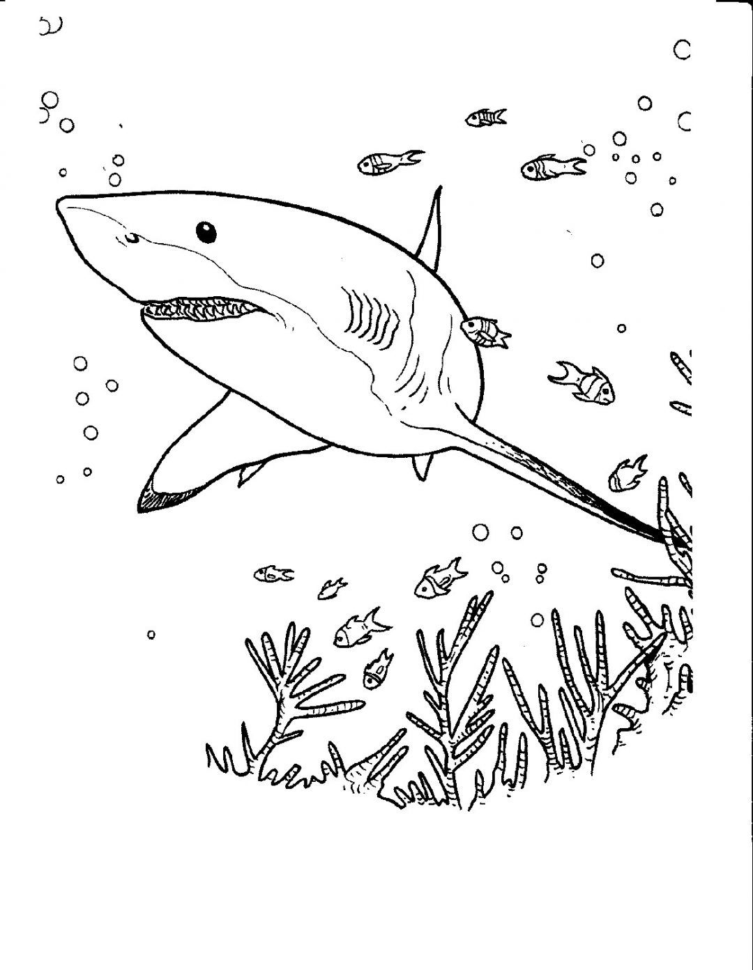 Shark Coloring Pages Vector Shark Coloring Pages Great White