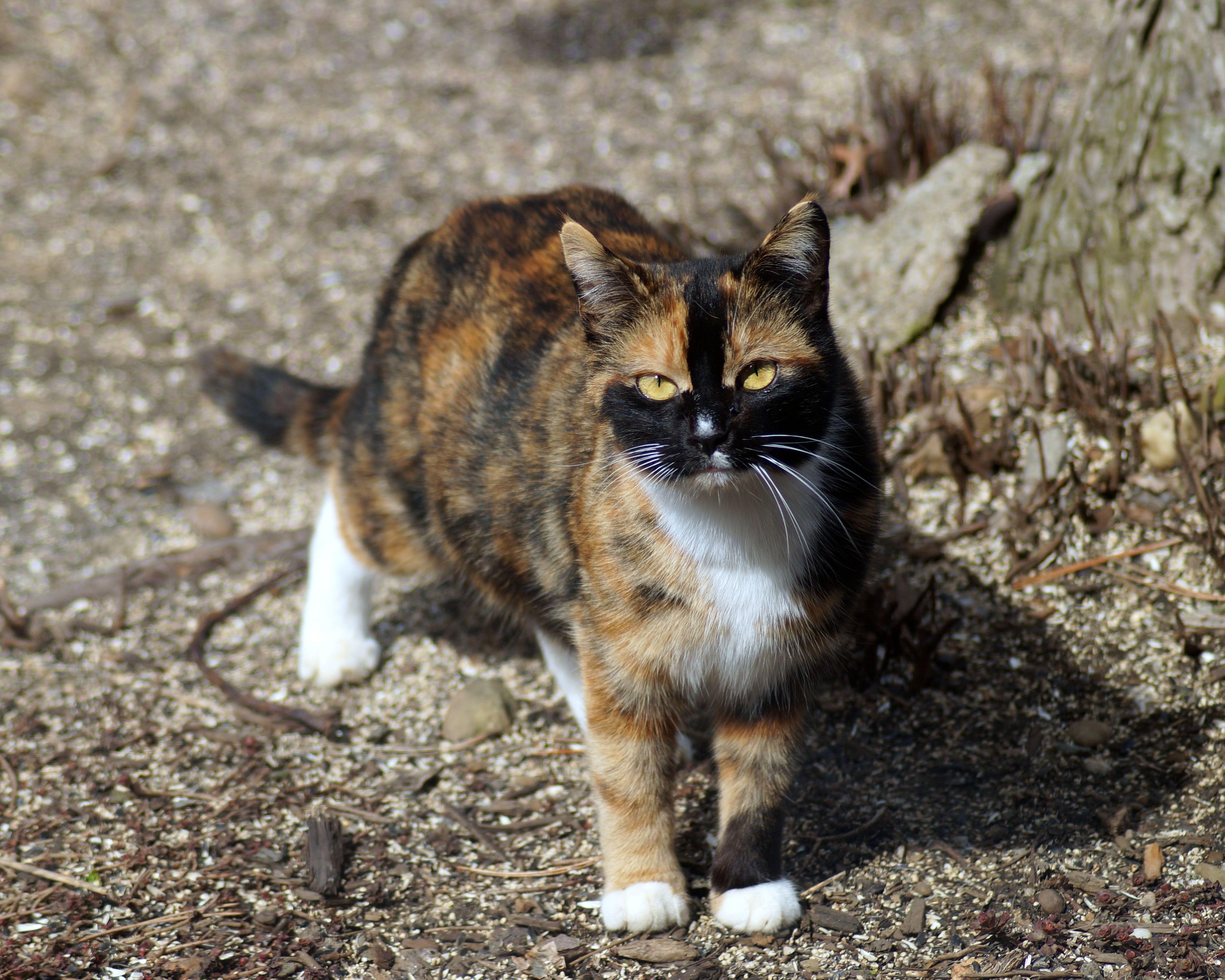 Stray kittie