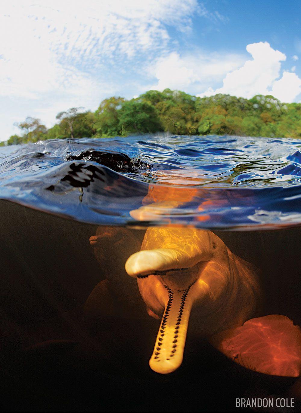 15 Insane Underwater Photos Of The Deadliest Animals In Brazil
