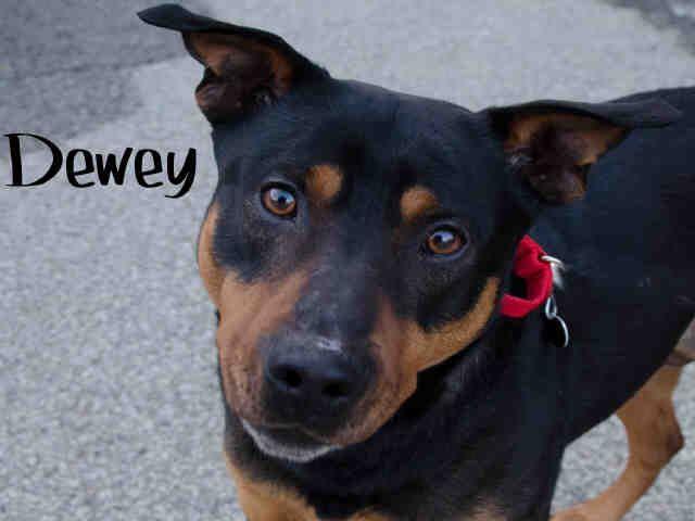 Dewey Lovebug Found Outside Of Pittsburgh Pa Now Adoptable