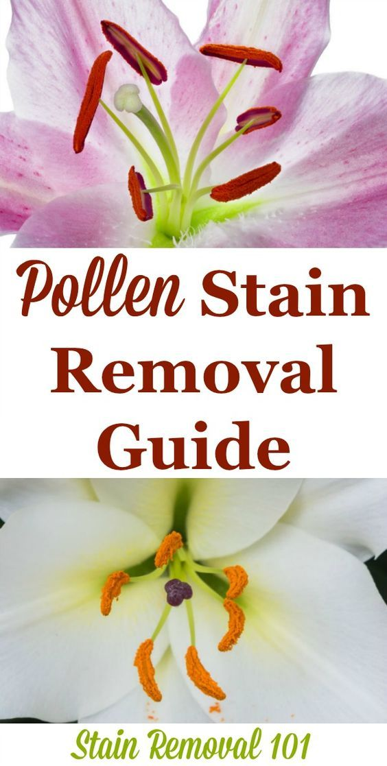 Step By Instructions For Pollen Stain Removal From Clothing Upholstery And Carpet So You