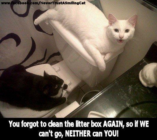 Cats Animals Kittens Pets Funny Cat Illnesses
