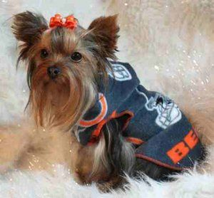 check out 56068 726a2 NFL Chicago Bears Dog Clothes Snuggly XS or SM (Med ...