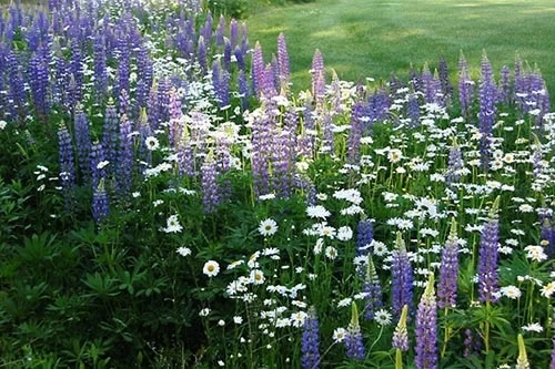 Photo of Top Perennial Plants For Wildflower Meadows