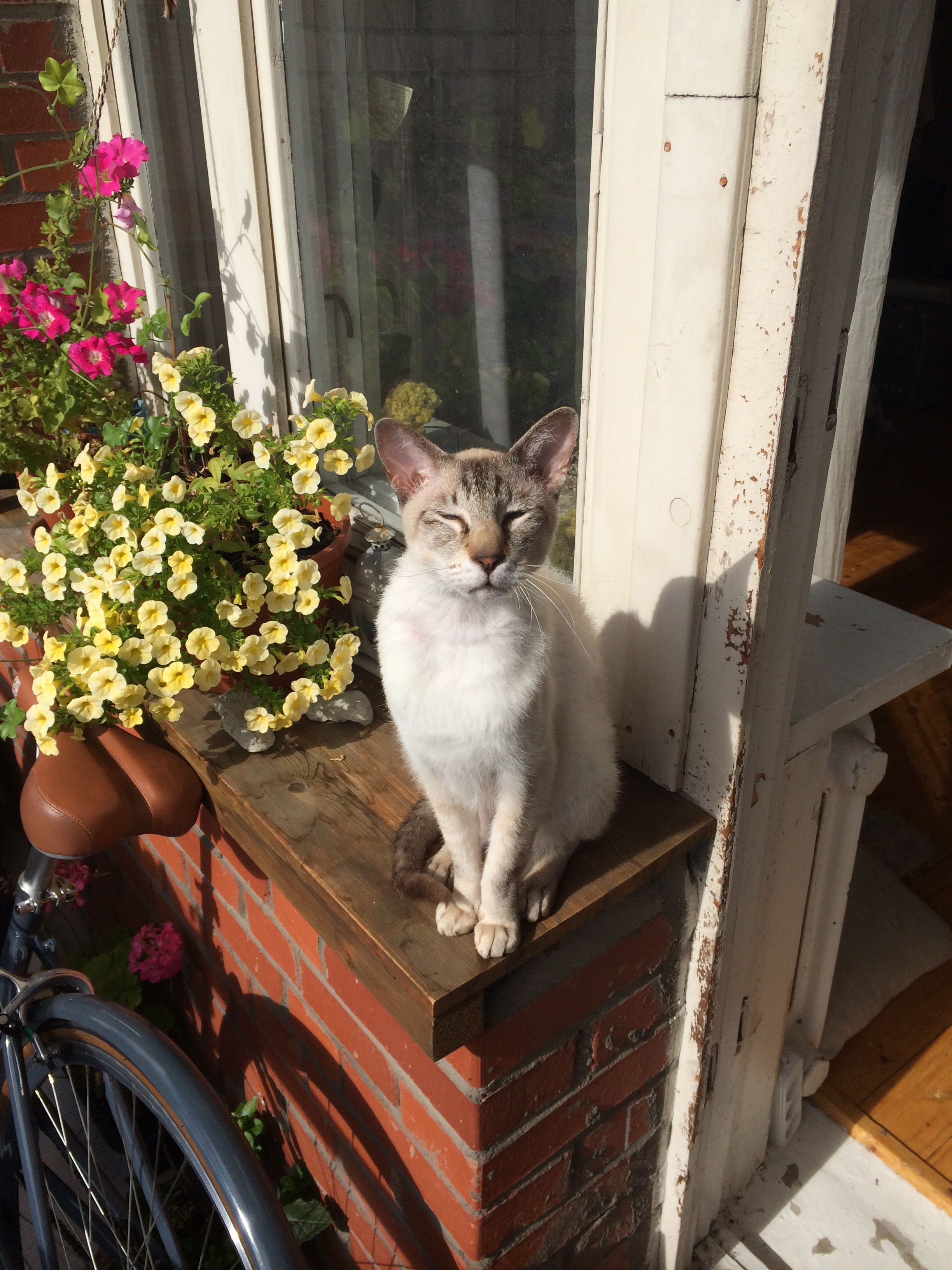 my cat Jareth:)