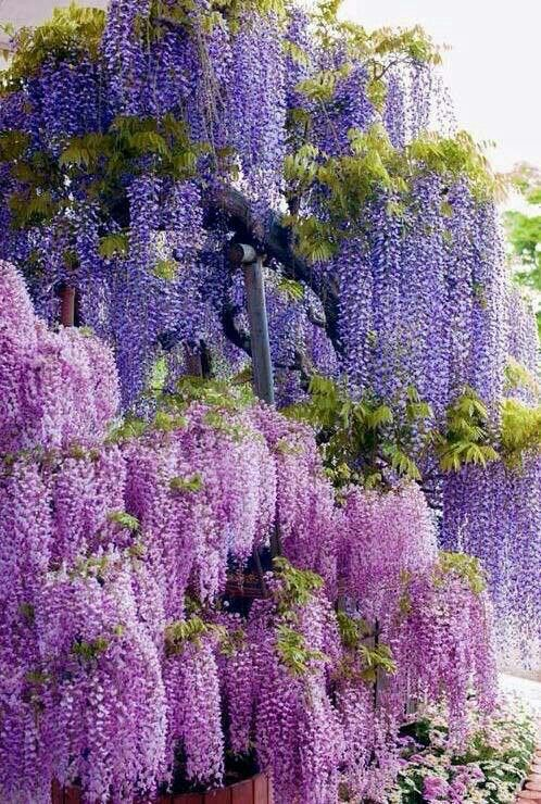 Pin By Ginette Mccleaster On Japan Beautiful Flowers Plants Beautiful Gardens