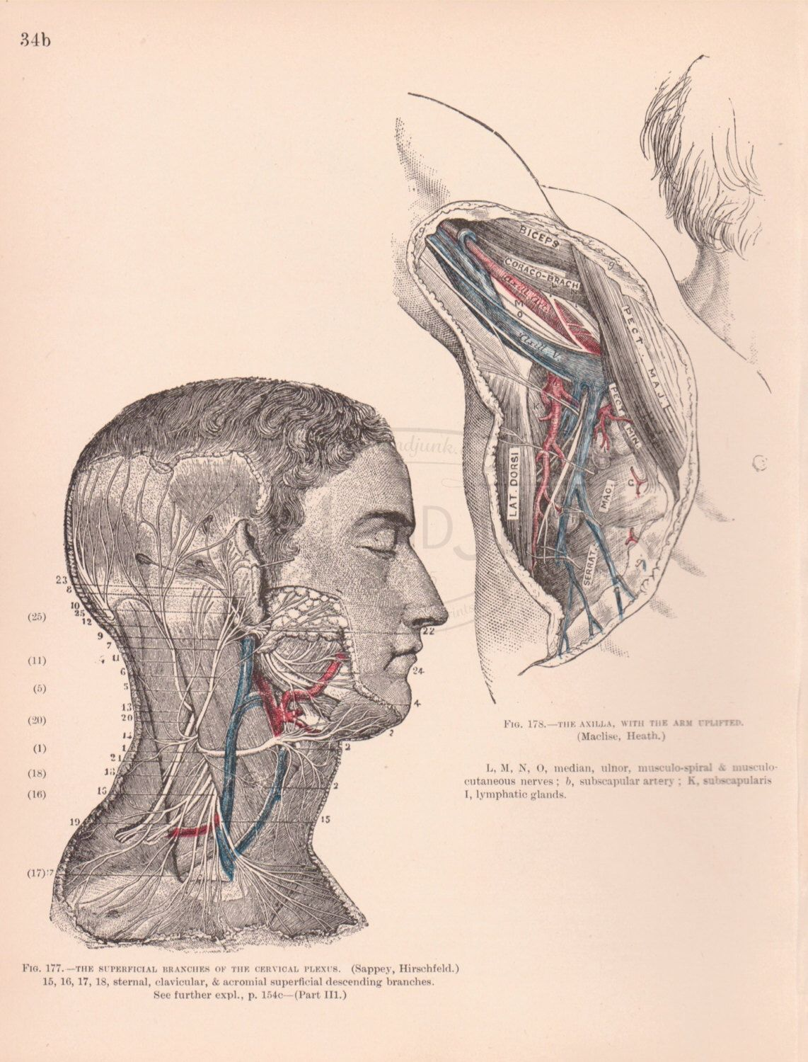 Fiver Friday Vintage Medical Drawing Antique Medical Print Anatomy Print 1898 Human Head And Various Veins And Medical Drawings Vintage Medical Drawings