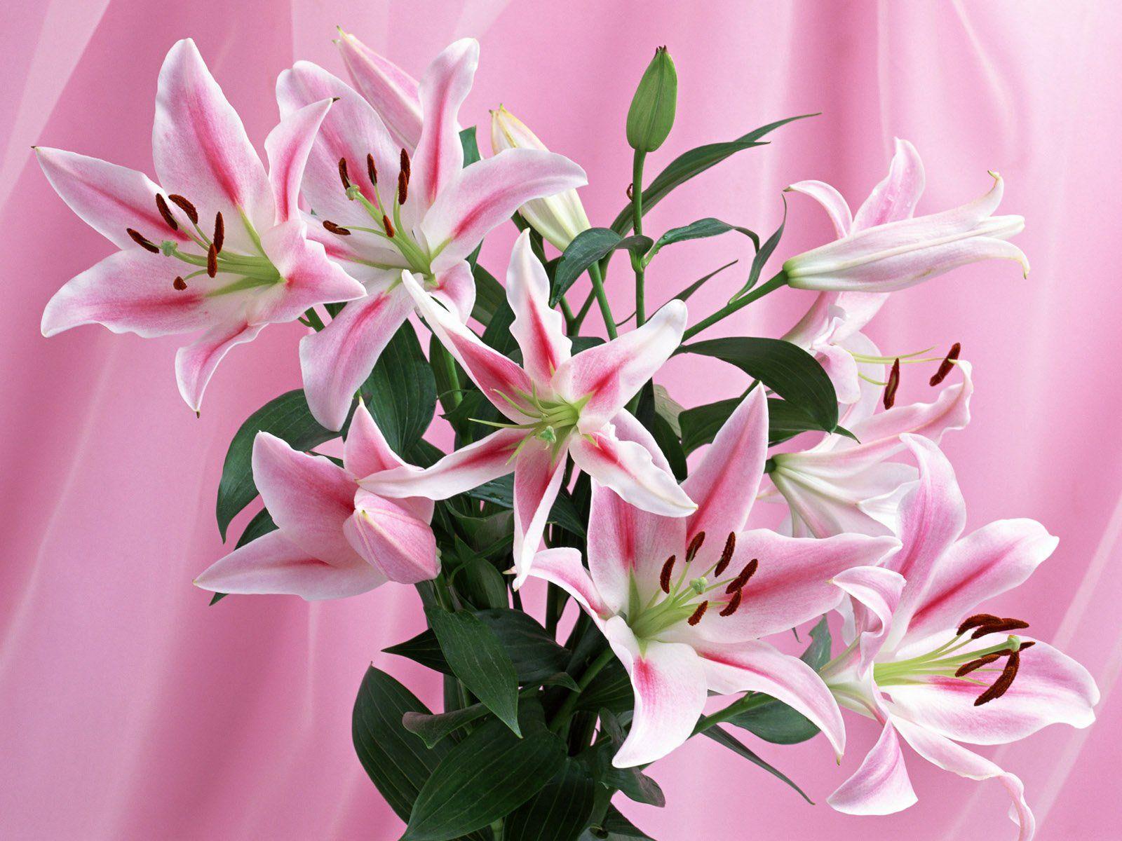 Beautiful Pink Flowers Favorite Color Pinterest Beautiful