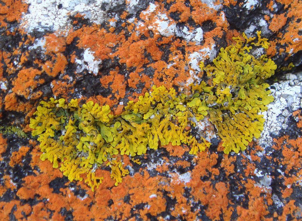 colourful lichen @ wineglass bay, tasmania - two | by goatsfoot