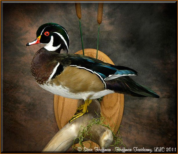 Duck Blind Ideas