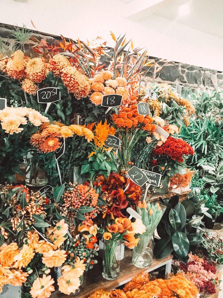 Flowers in Melbourne Flower aesthetic, Pretty flowers