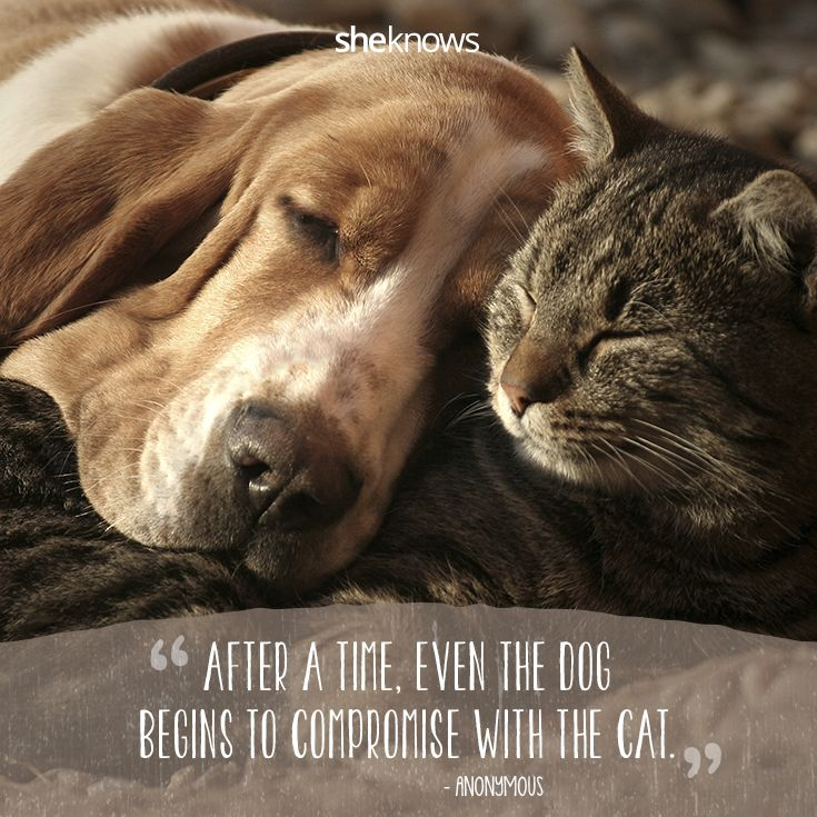 cat and dog friendship quotes