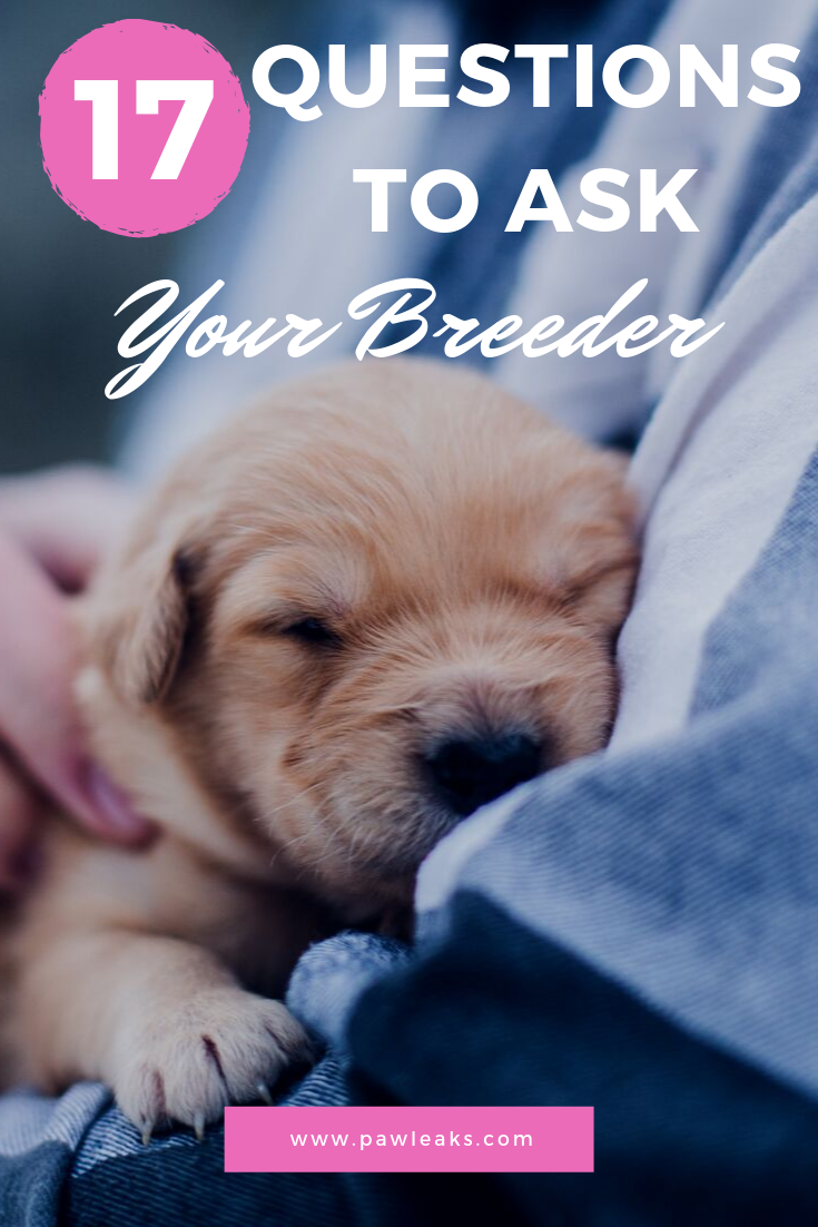 All 17 Questions You Need To Ask Your Potential Breeder Pawleaks Dog Breeder Puppy Training New Puppy
