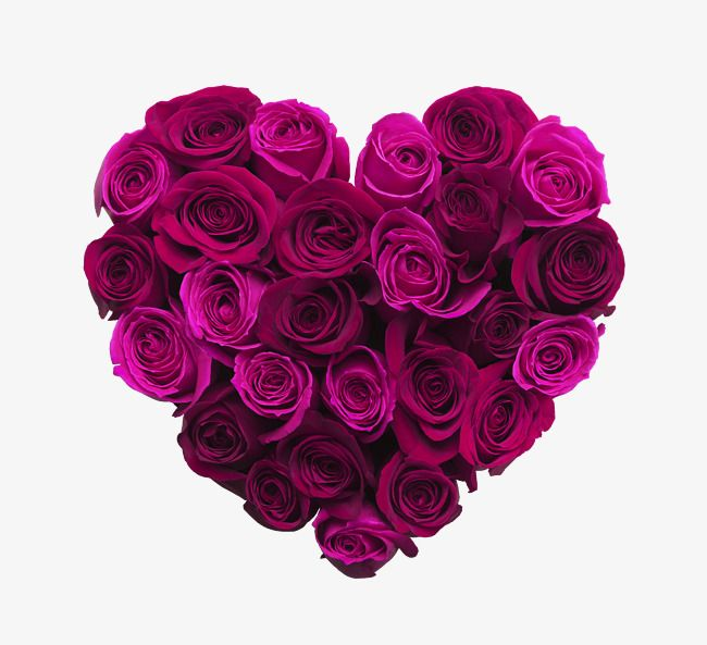 Purple Heart Heart Clipart Rose Purple Png Transparent Clipart Image And Psd File For Free Download Beautiful Rose Flowers Beautiful Roses Rose