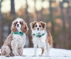 Dog Winter Snow Hd Desktop Wallpapers With Images Dogs