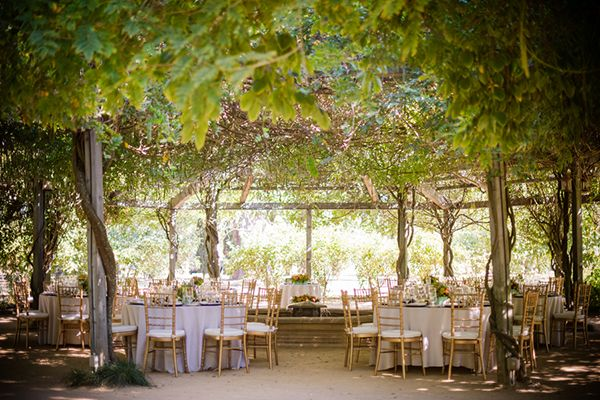 Colorful And Clic Vineyard Wedding In Northern California
