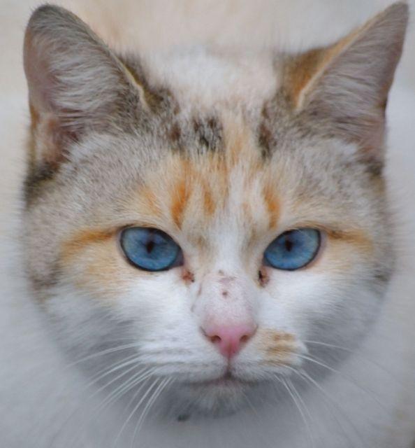yeux bleu azur